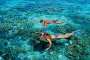 澳地方政府出台新规保护潜水游客安全