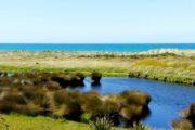 新西兰自然湿地已流失九成