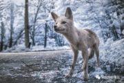 摄影师用红外线拍下切尔诺贝利鬼城现在的一切……