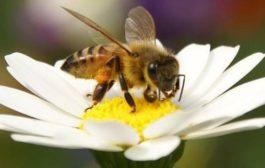 新研究:一些常见昆虫也面临灭绝威胁